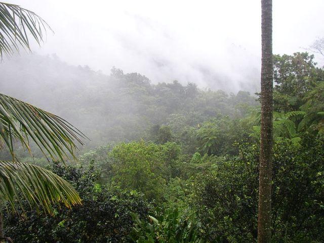 800px-El_Yunque_Puerto_Rico