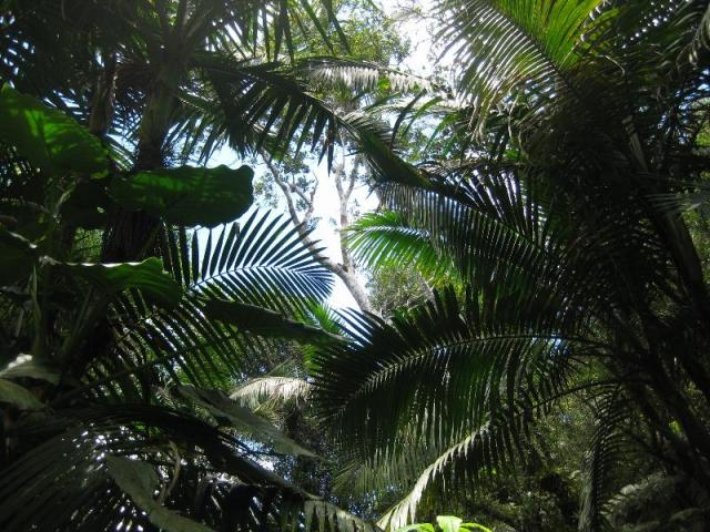 PR_yunque_rainforest_8