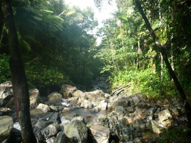 rain-forest-san-juan-puerto-rico+1152_12791700510-tpfil02aw-9102