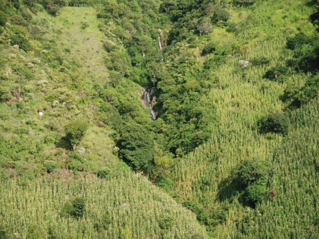 guatemala (50)
