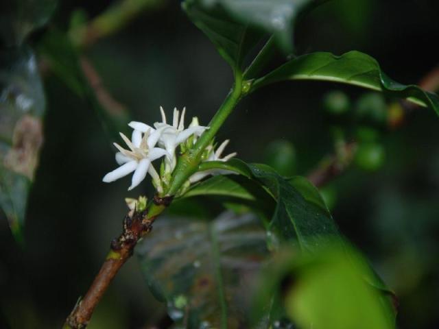 guatemala (51)