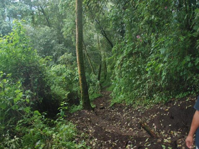 guatemala (56)