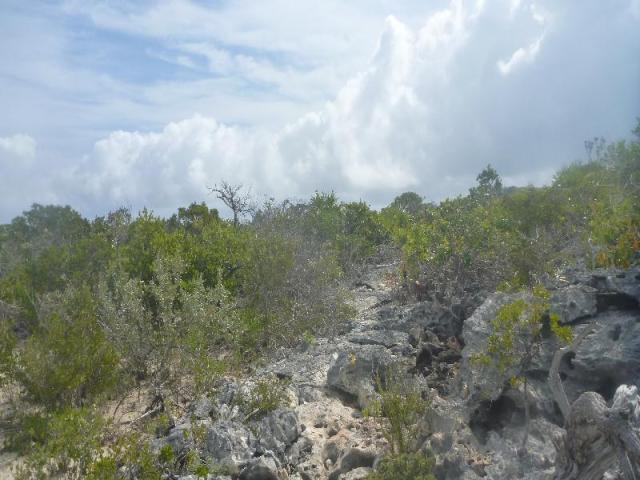 bahamas (24)