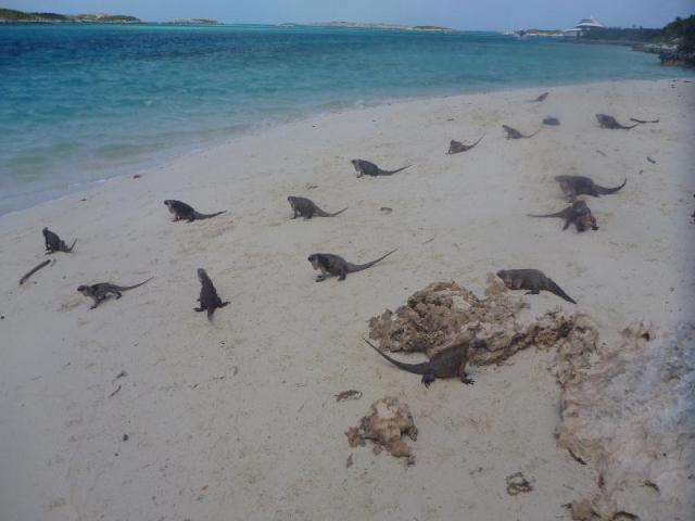 bahamas a (7)